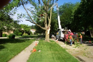 preventing tree damage