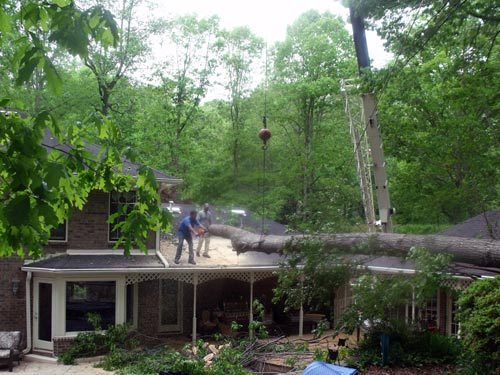 Emergency Service of a Very Large Tree Removal