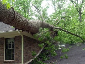 Emergency Tree Removal From A Roof