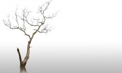 dead tree in winter