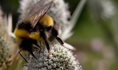 Seasonal allergies in Georgia