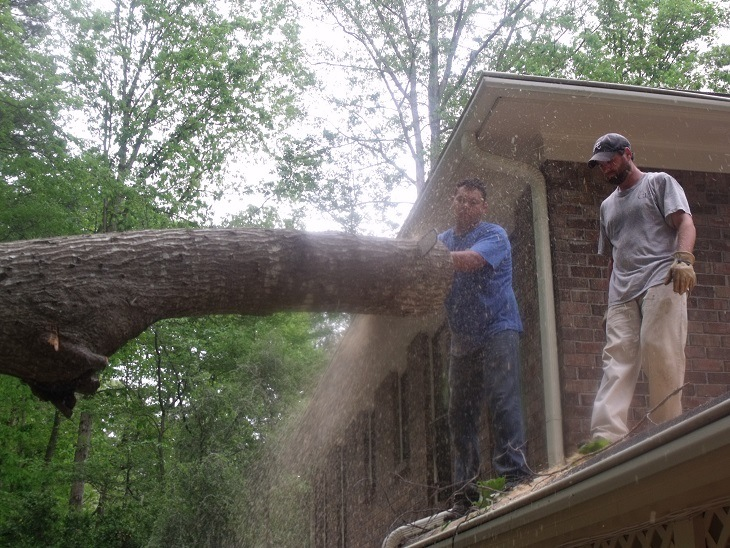 Safety First at Sharp Tree Service