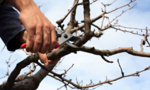 tree trimming, pruning