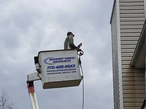 crane tree service cumming
