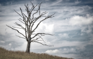 dying-tree-pic
