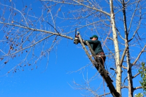 tree trimming tech cutting branch pic