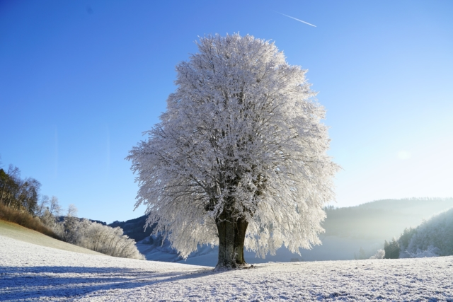 winter tree covered in snow