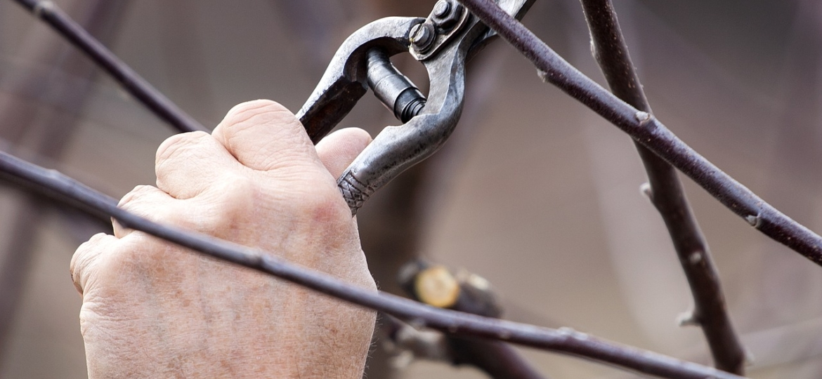Pruning a Tree by Hand